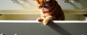 Как закрыть шкаф-купе от кота?