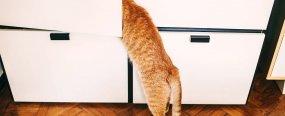 Почему кошка прячется в шкафу?